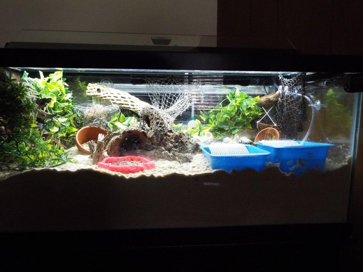40 gallon breeder update6