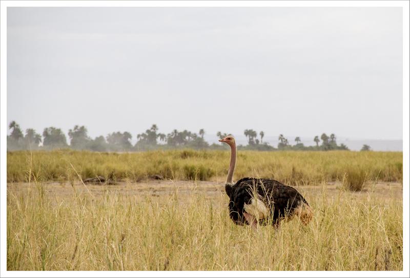 Amboseli-43
