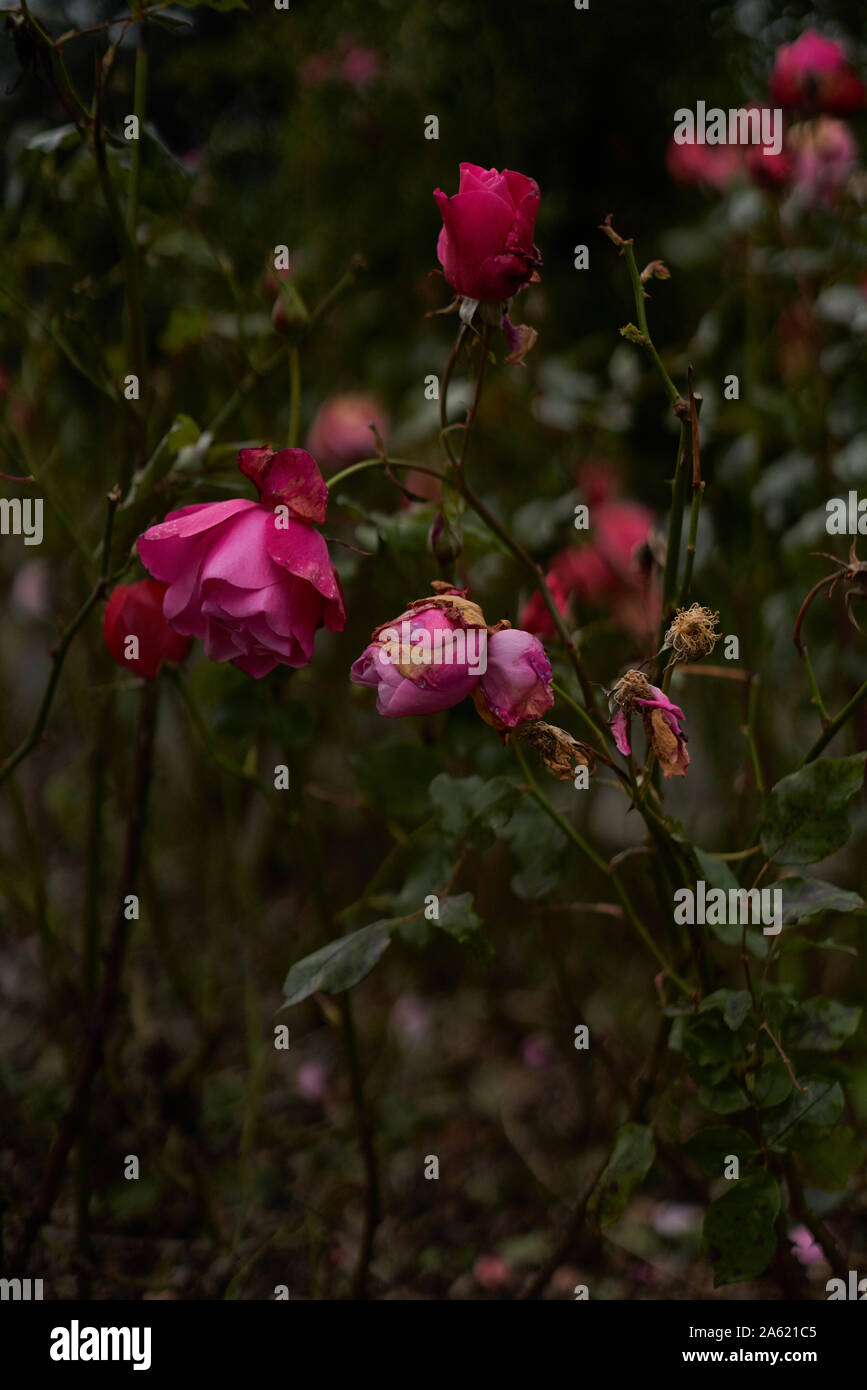 Drooping Flowers Stock Photos Drooping Flowers Stock Images Alamy