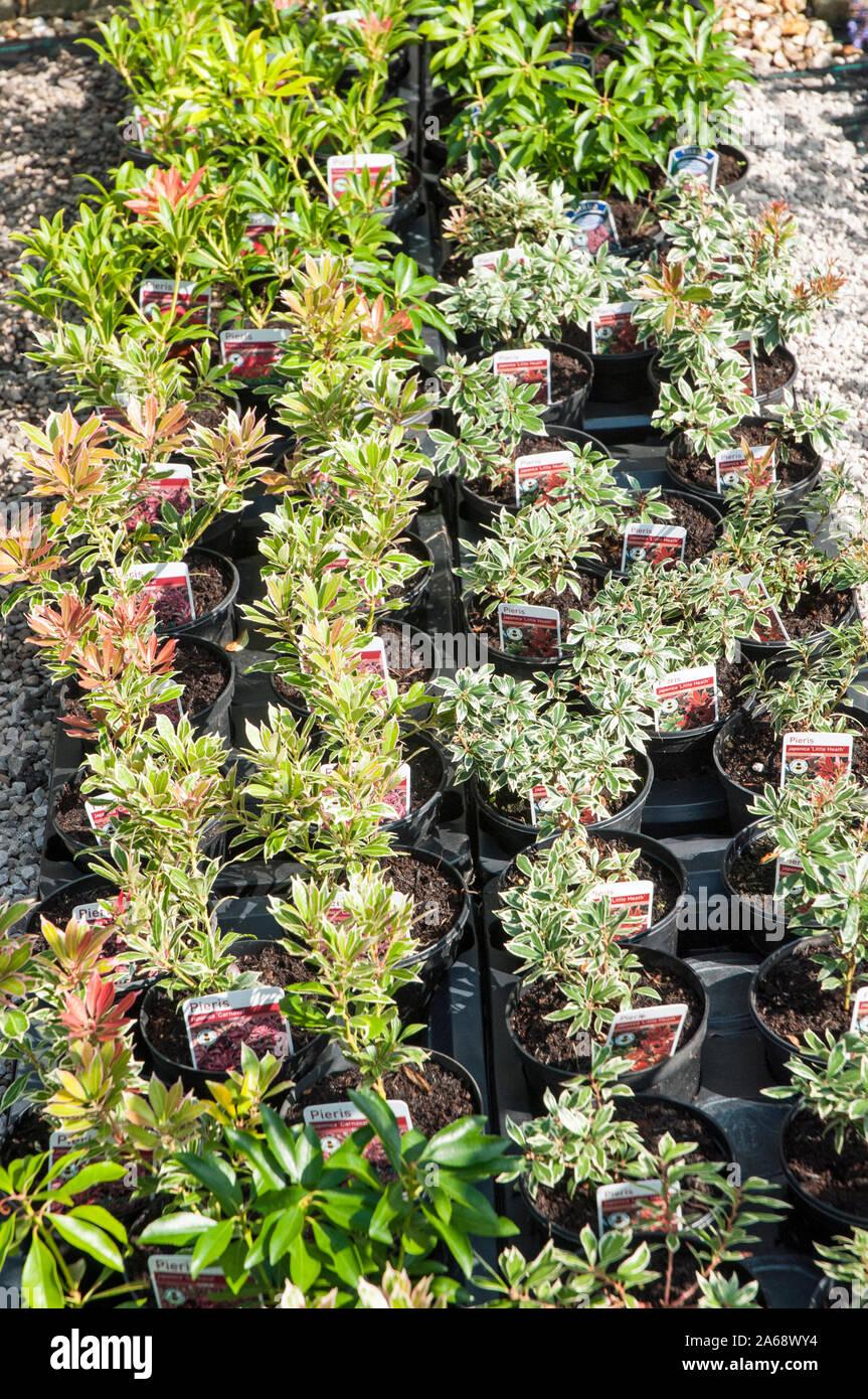 Ericaceous Plants Stock Photos Ericaceous Plants Stock Images