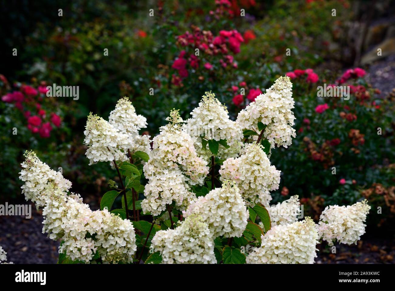 Mixed Shrubs Stock Photos Mixed Shrubs Stock Images Alamy