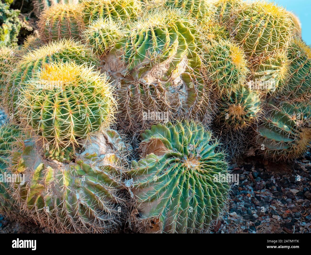 Cactus Bush Stock Photos Cactus Bush Stock Images Page 2 Alamy