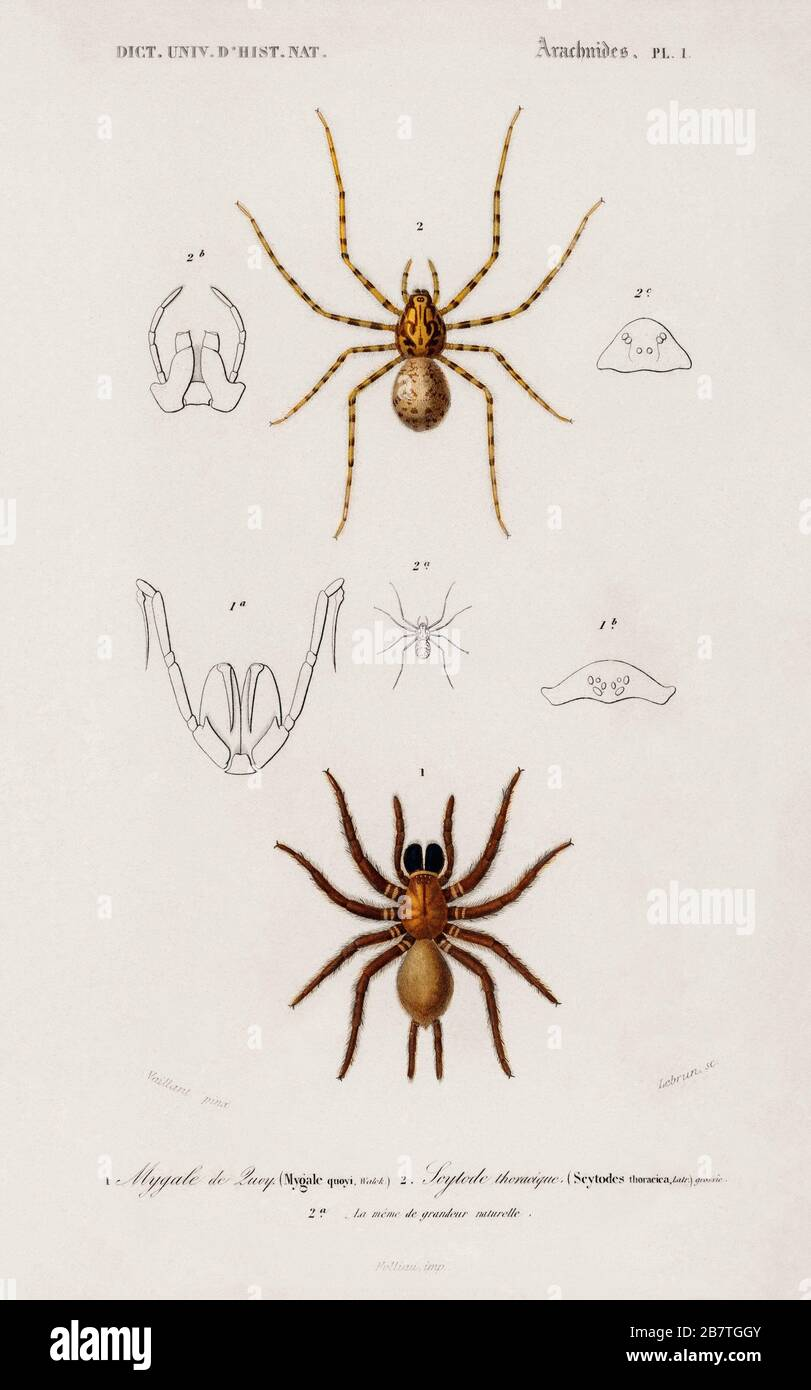 Types Of Spiders High Resolution Stock Photography And Images Alamy