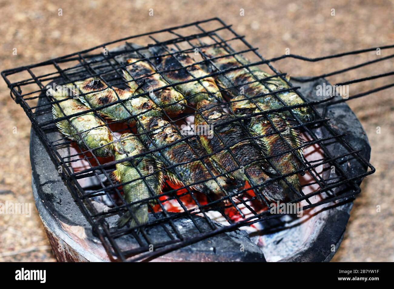 https www alamy com grilled fish thai food style cooking grilled climbing perch fish on grate on charcoal stove asia fish food anabas testudineus image349122299 html