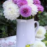 Bouquet Of Dahlia Flowers In White And Purple In Vase Stock Photo Alamy