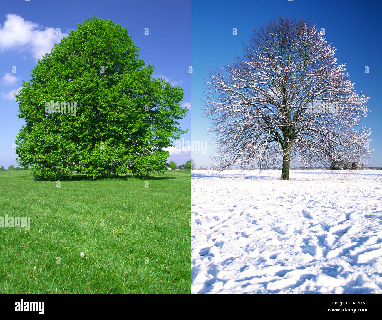 Trees In Summer And Winter Bristol Downs England Uk Stock