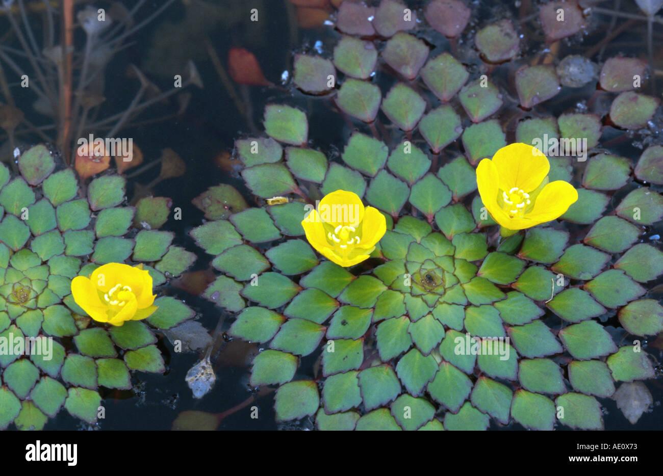 Free Floating Plants
