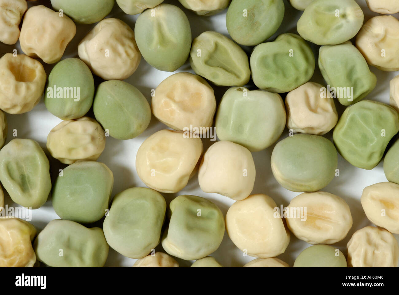 Pea Seeds Green Yellow Smooth Wrinkled Traits Gregor
