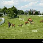 Kentucky Horse Park And Surrounding Horse Farms In Lexington Ky Stock Photo Alamy