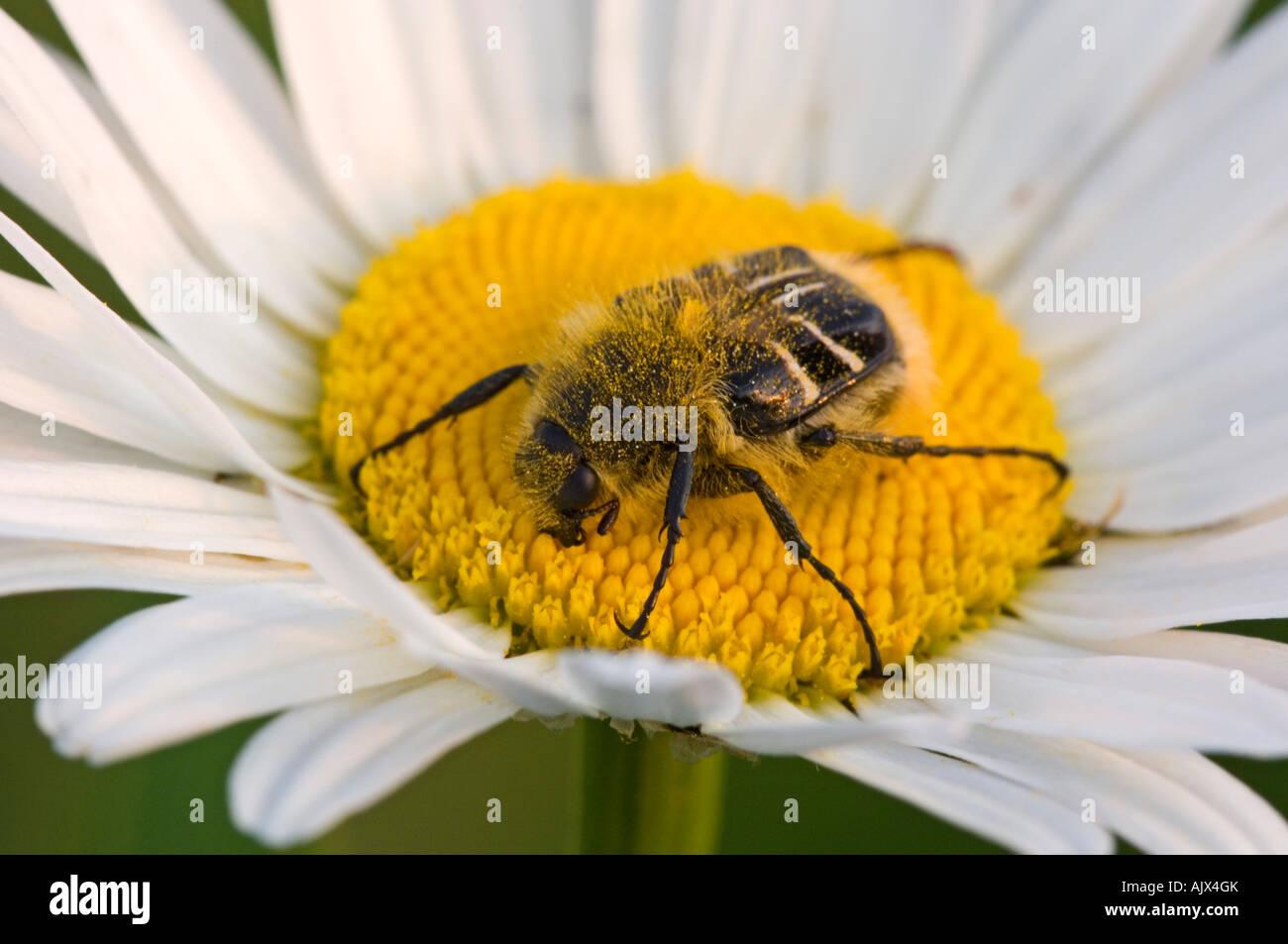 Plant Pollination Worksheet
