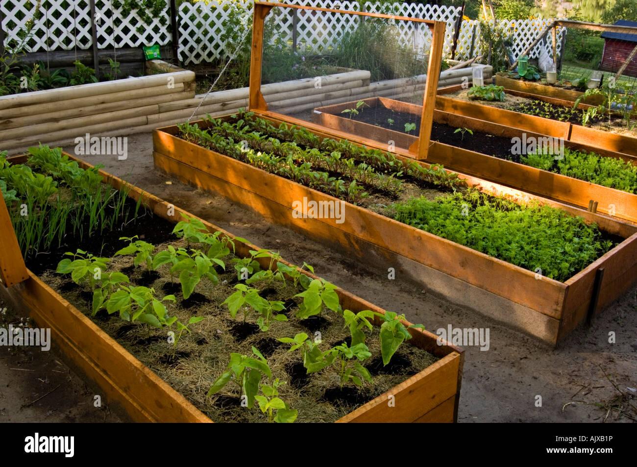 Raised Vegetable Garden Canada
