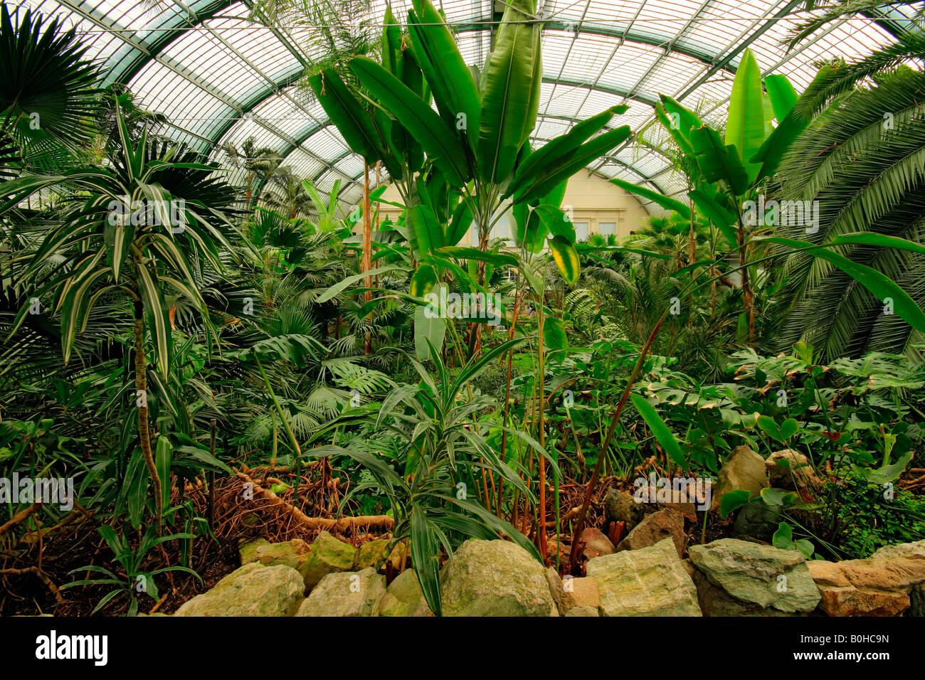 Indoor Plants Germany