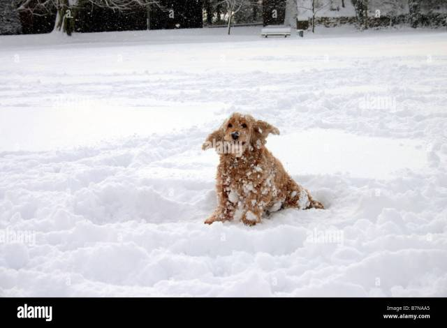 A Dog Discovers Snow For The First Time On The Butts At Alton Hampshire Uk