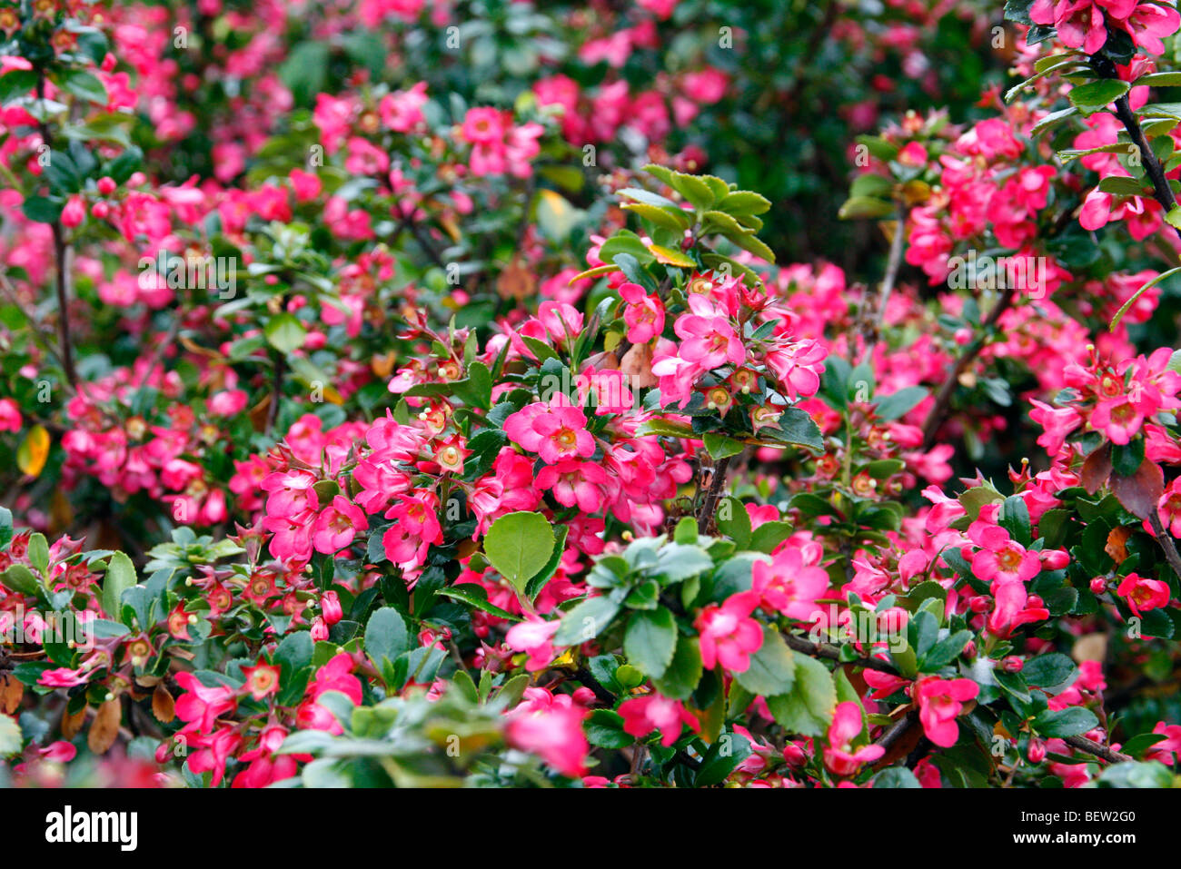 Hedging Stock Photos Hedging Stock Images Alamy