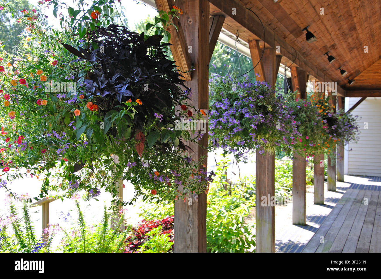 https www alamy com stock photo hanging plant on porch 26476513 html
