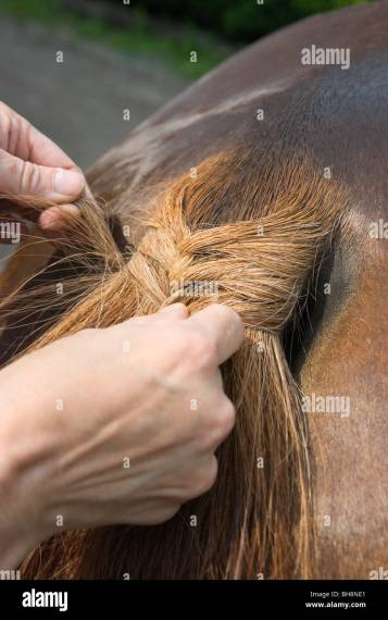 Hand On Horse Stock Photos   Hand On Horse Stock Images   Alamy Picture of a horse tail being braided  focus on knot    Stock Image