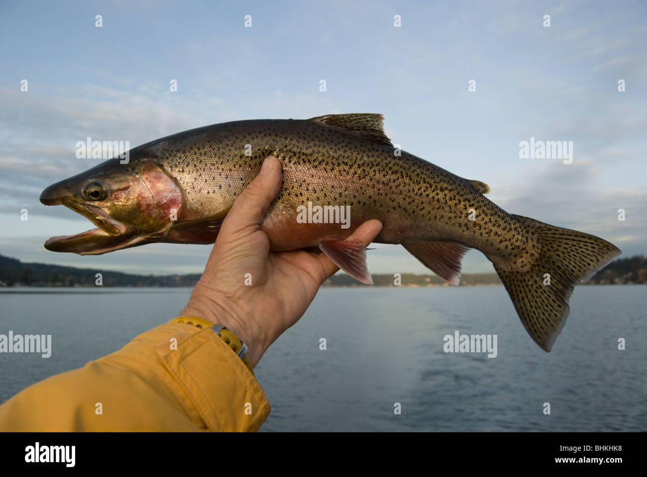 Cutthroat Trout Fishing Lake Sammamish Washington Near