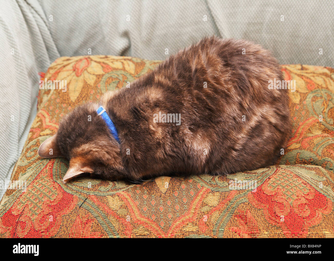 https www alamy com stock photo a cat hides from the world by sleeping face down on a pillow 33370786 html