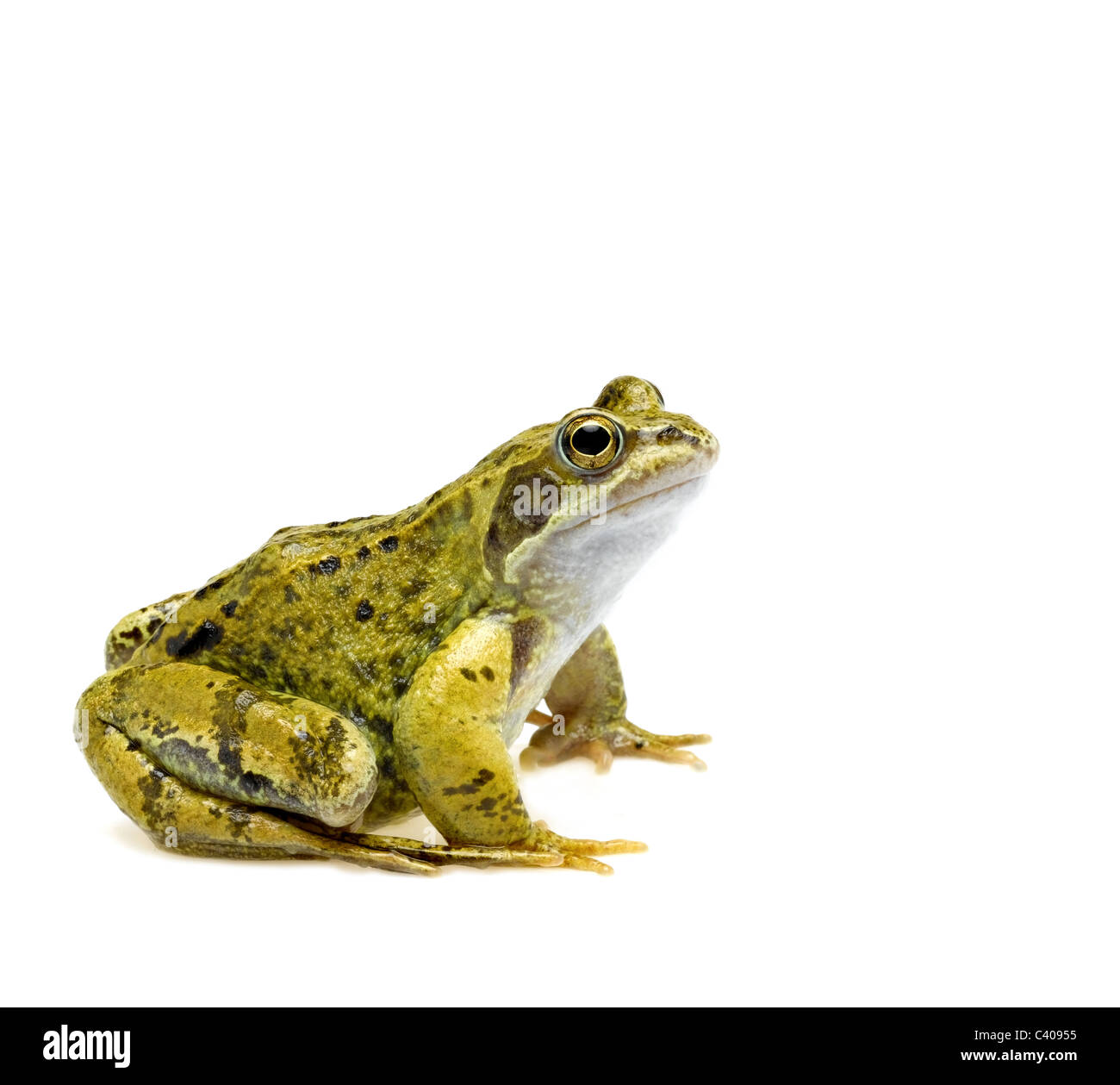 Frog Cut Out Stock Photo Royalty Free Image