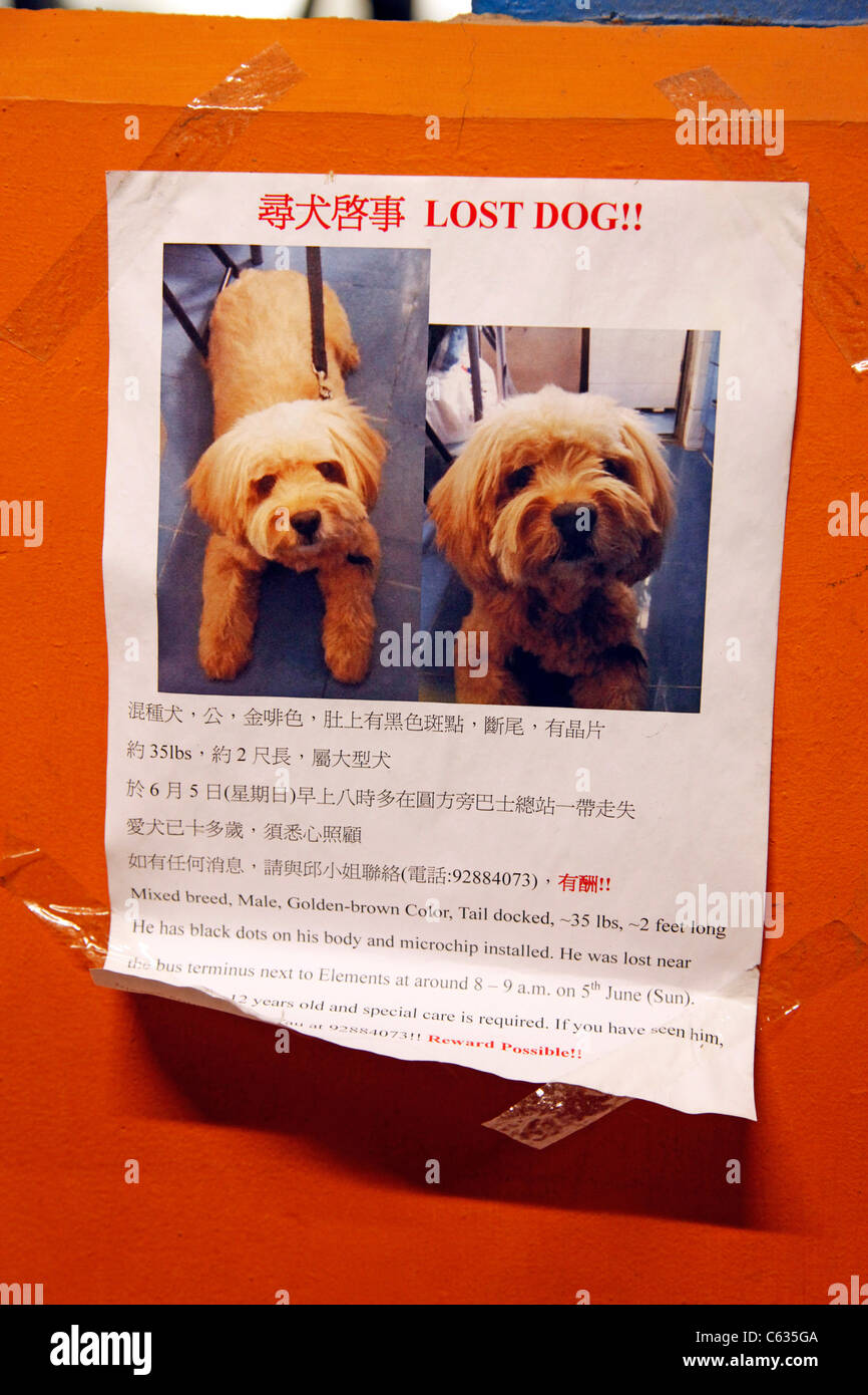https www alamy com stock photo lost dog poster for a missing pet in hong kong china 38178906 html