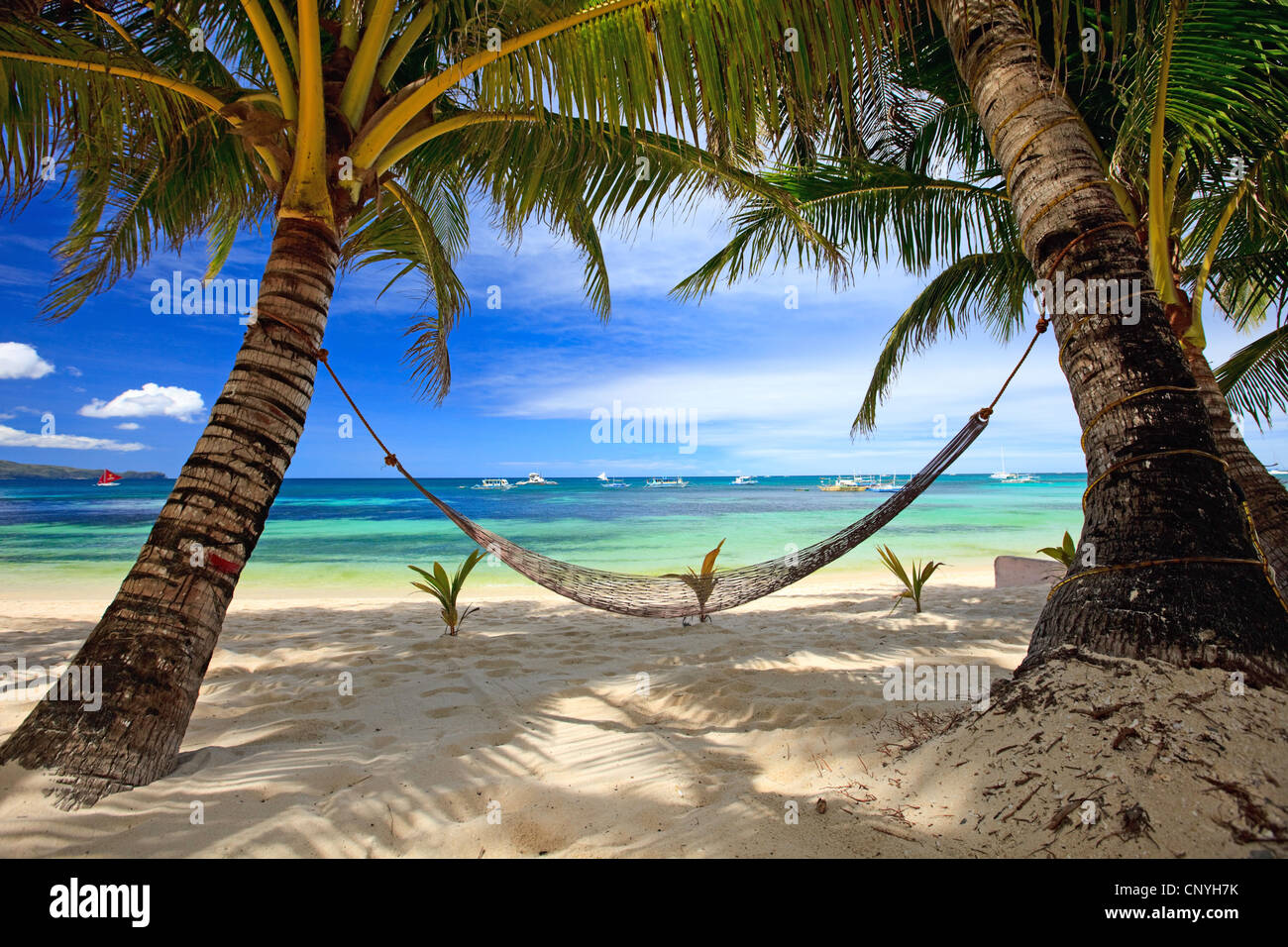 Hammock Between Two Palm Trees At Tropical Beach