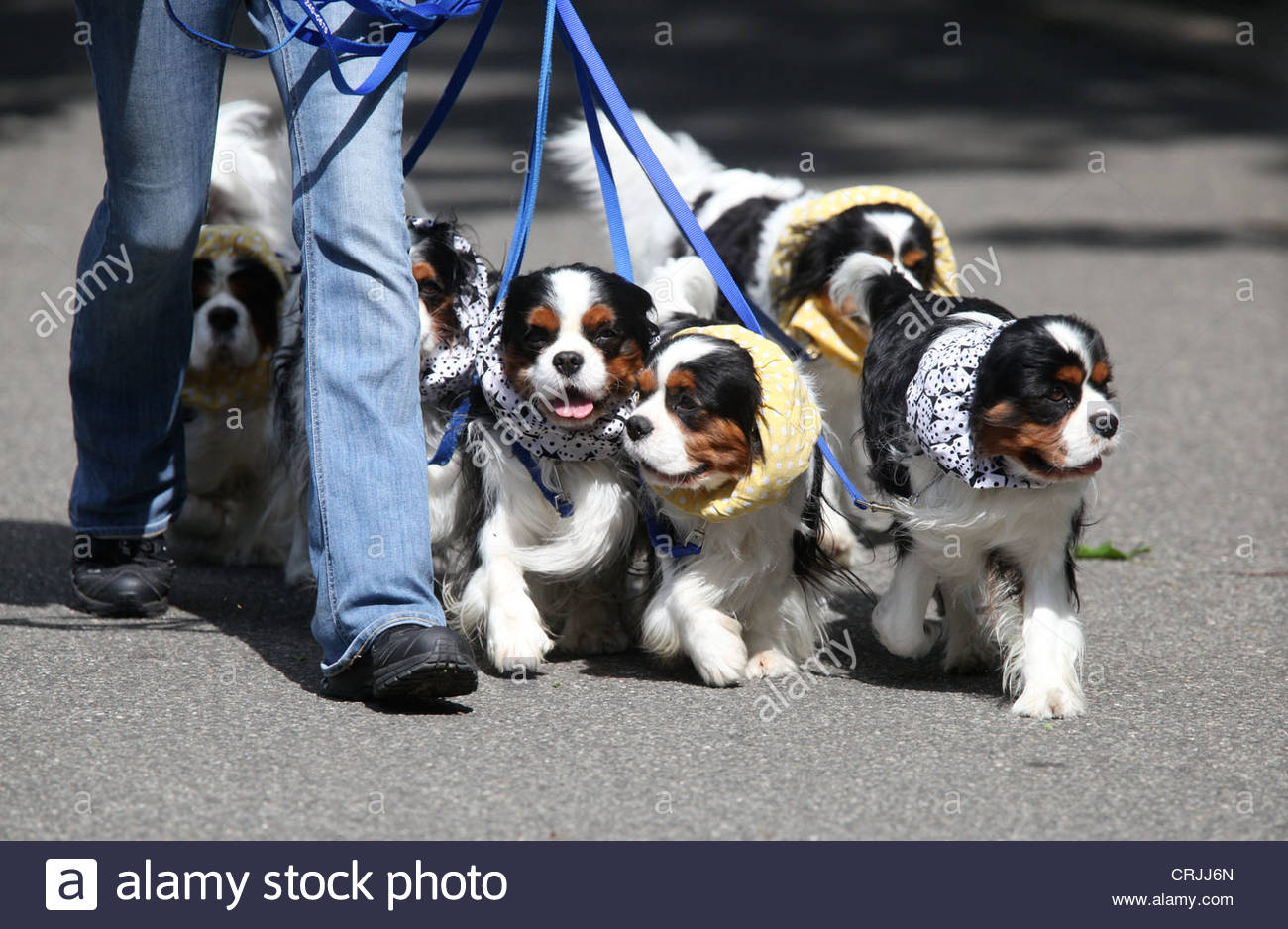 Image result for dog walking stock photo