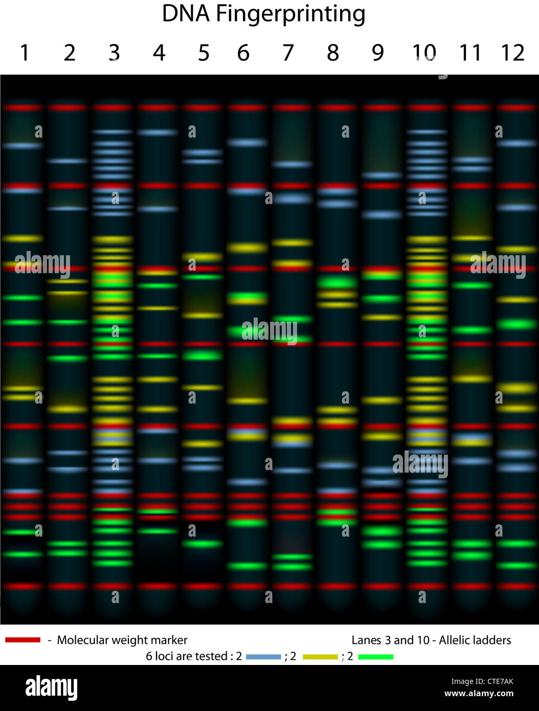 Dna Fingerprinting Example Gel Stock Photo