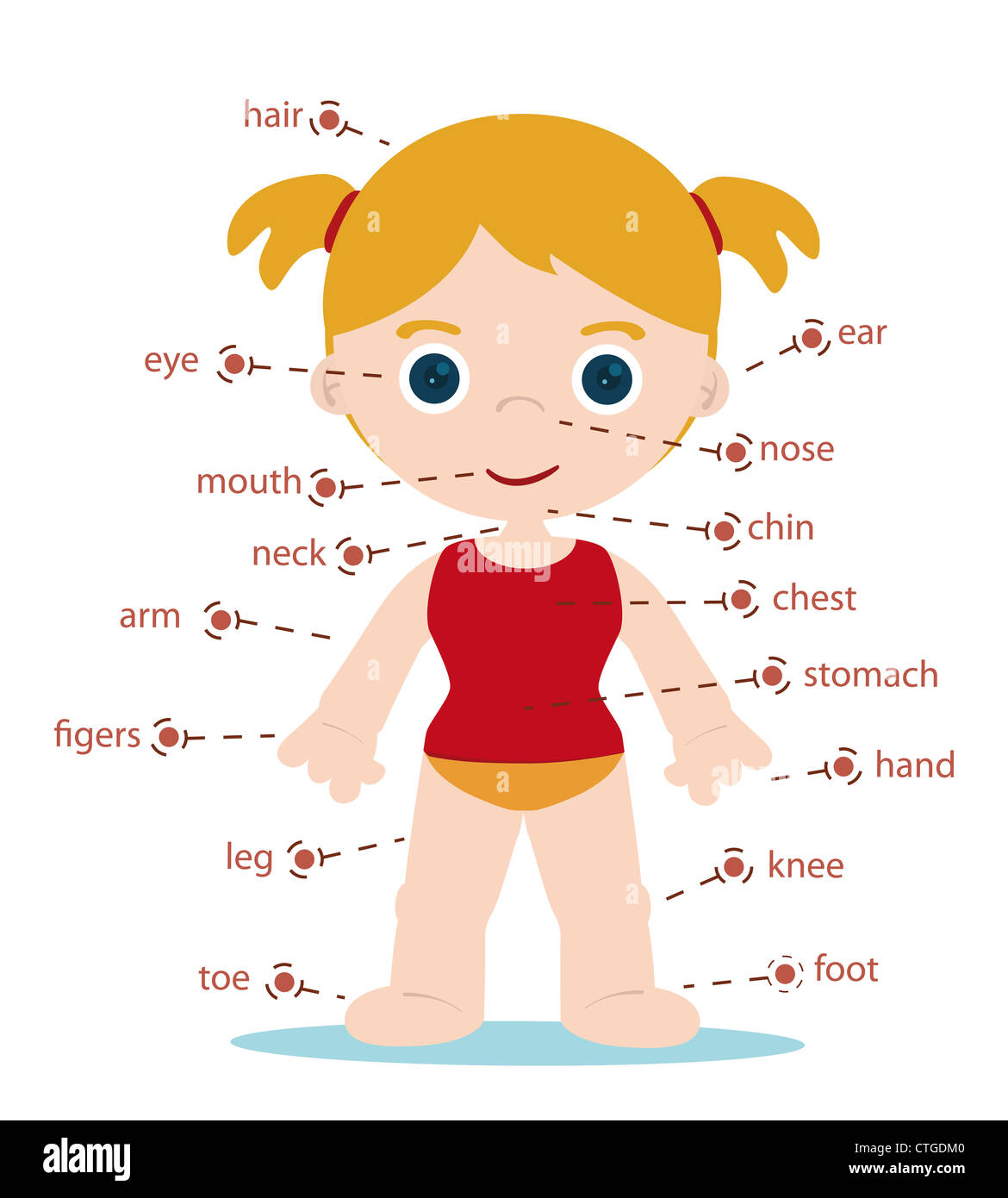 Girl Body Parts Chart For School Stock Photo