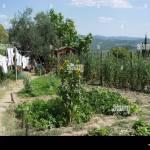 Vegetable Garden Of La Bottega Restaurant In Volpaia Tuscany Italy Stock Photo Alamy
