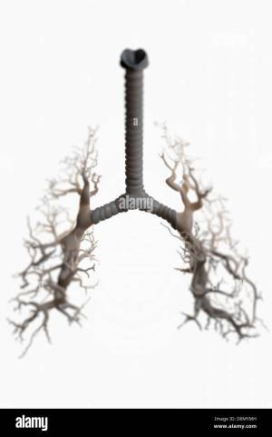 Diagram of showing the structure of the bronchi and bronchial tubes Stock Photo, Royalty Free
