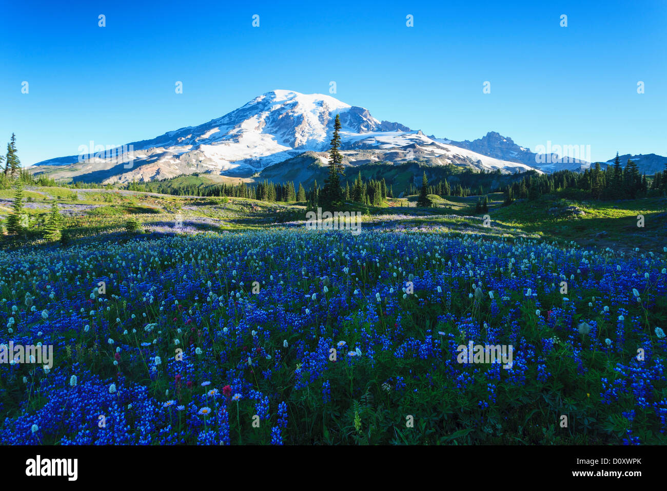 Wild Flower Meadow Stock Photos Amp Wild Flower Meadow Stock
