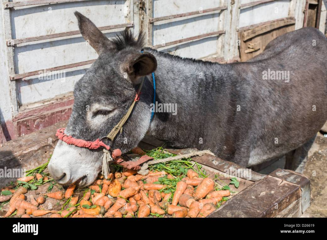 Image result for donkey with lots of carrots