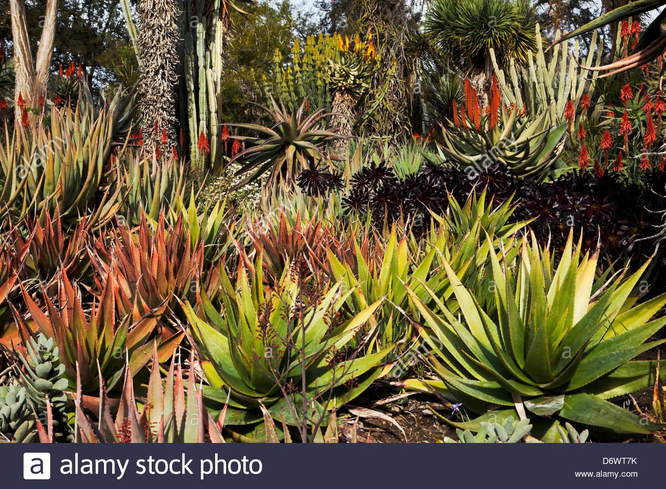 Botanical Flowers Garden Desert