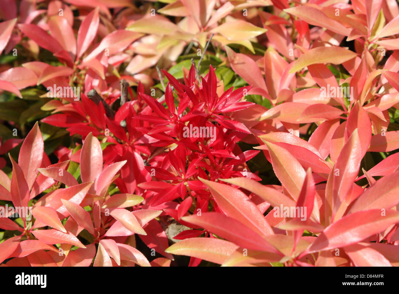 Flame Flower Stock Photos Flame Flower Stock Images Page 3 Alamy