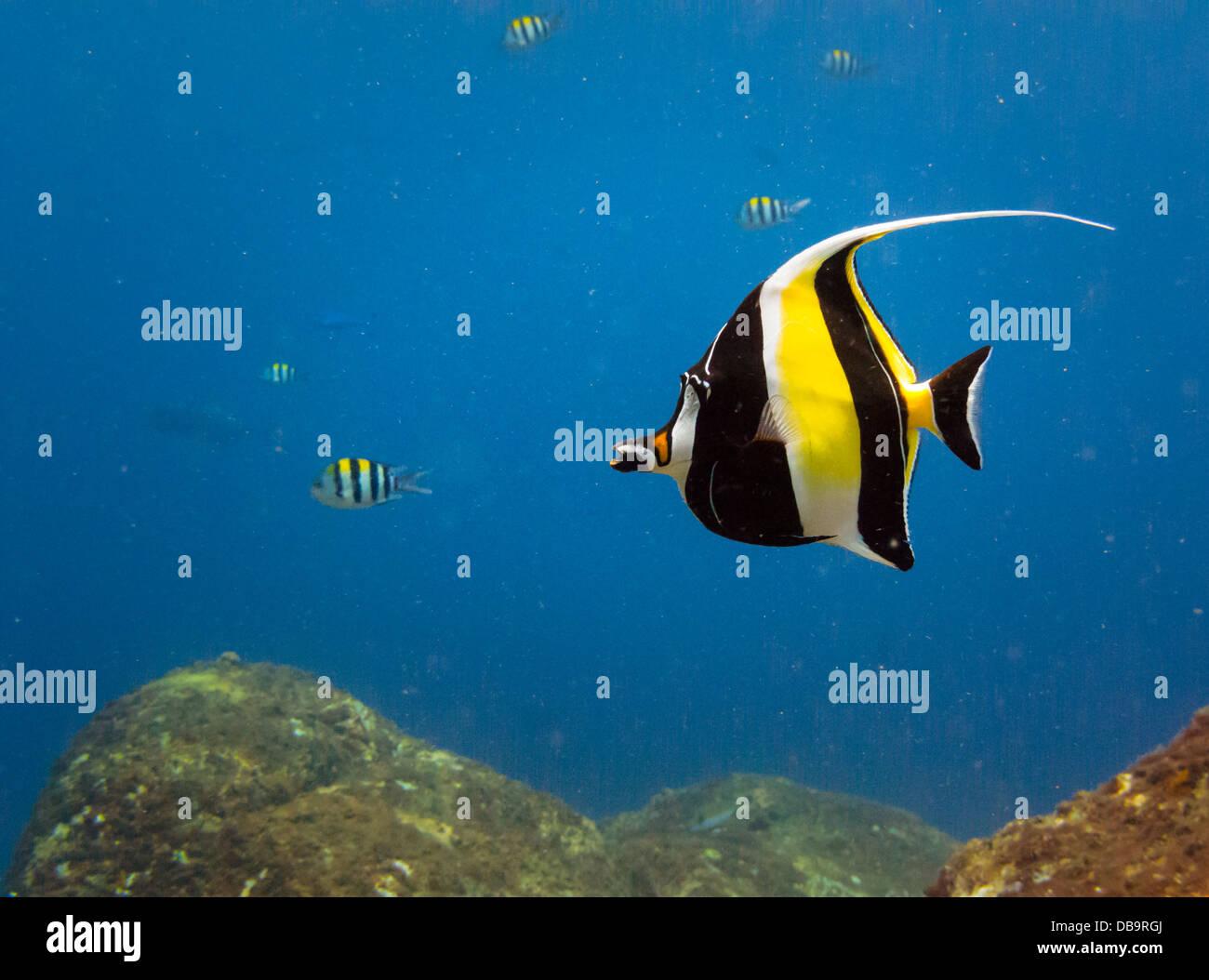 Close Up Of Brilliant Yellow Black White Striped