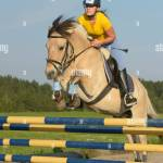 Young Rider On Back Of A Norwegian Fjord Horse Jumping Stock Photo Alamy