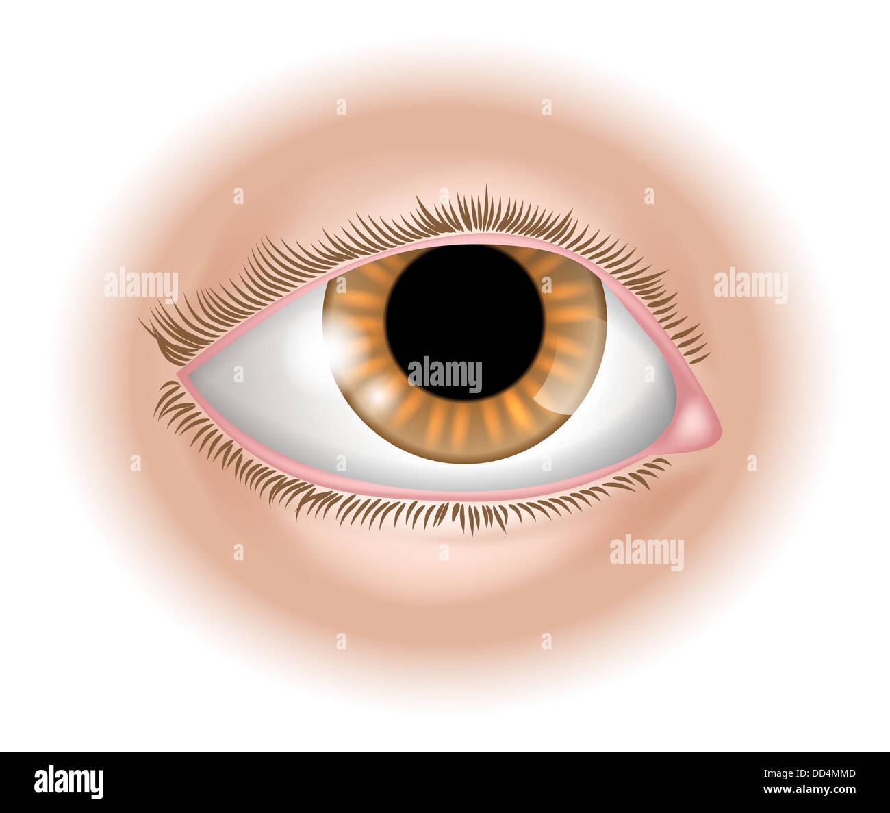 Five Senses Worksheet Eyes