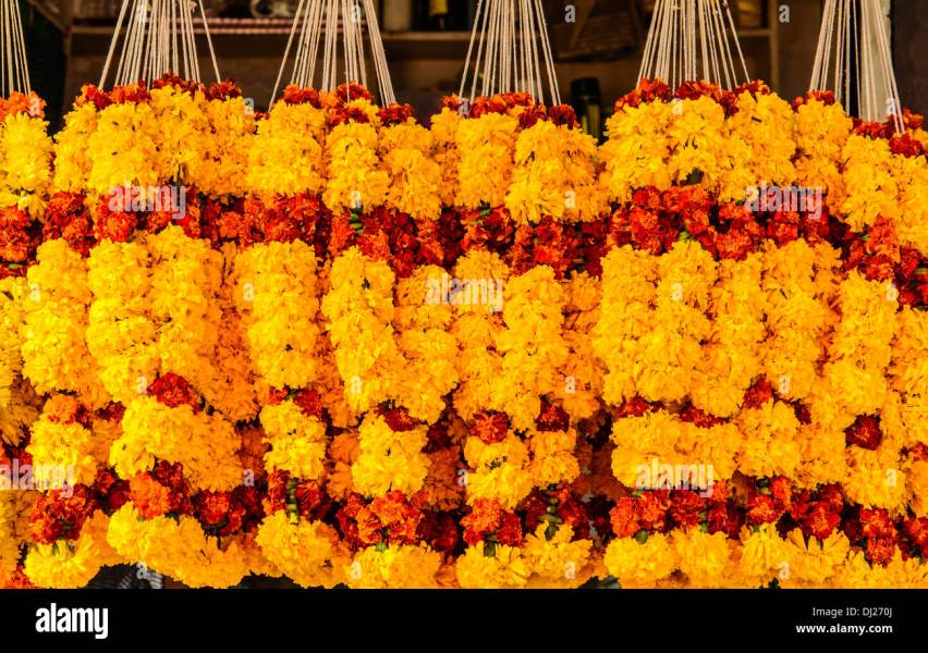 Marigold Flowers Indian Asian Stock Photos   Marigold Flowers Indian     Marigold Flowers garlands for sale at Mapusa Market  Goa  India   Stock  Image