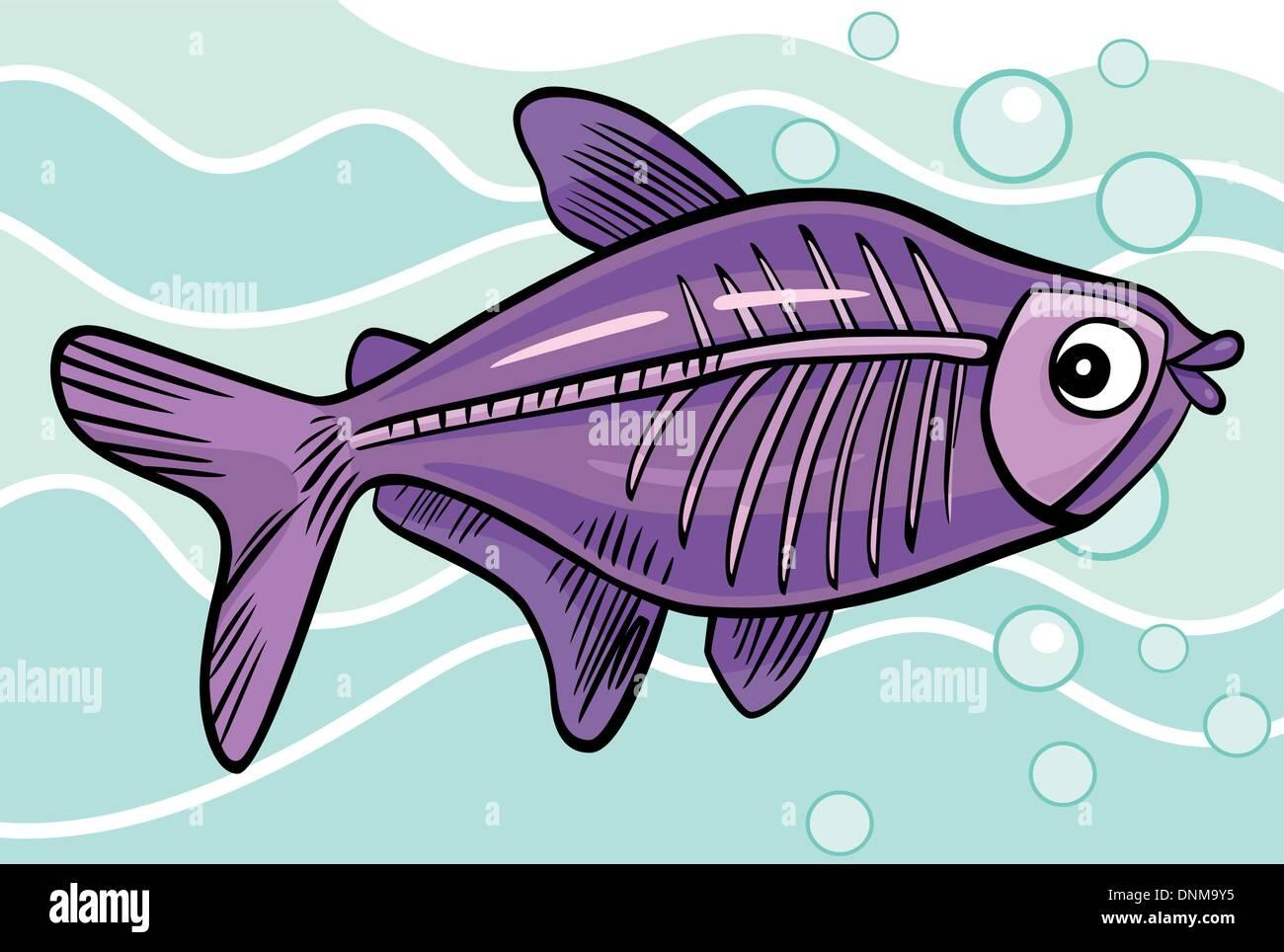 X Ray Fish Stock Photos Amp X Ray Fish Stock Images