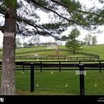 A Thoroughbred Farm With Black Fences Outside Of Lexington Kentucky Stock Photo Alamy