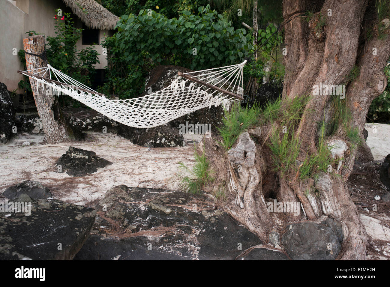 Beachfront Hammock Stock Photos Amp Beachfront Hammock Stock