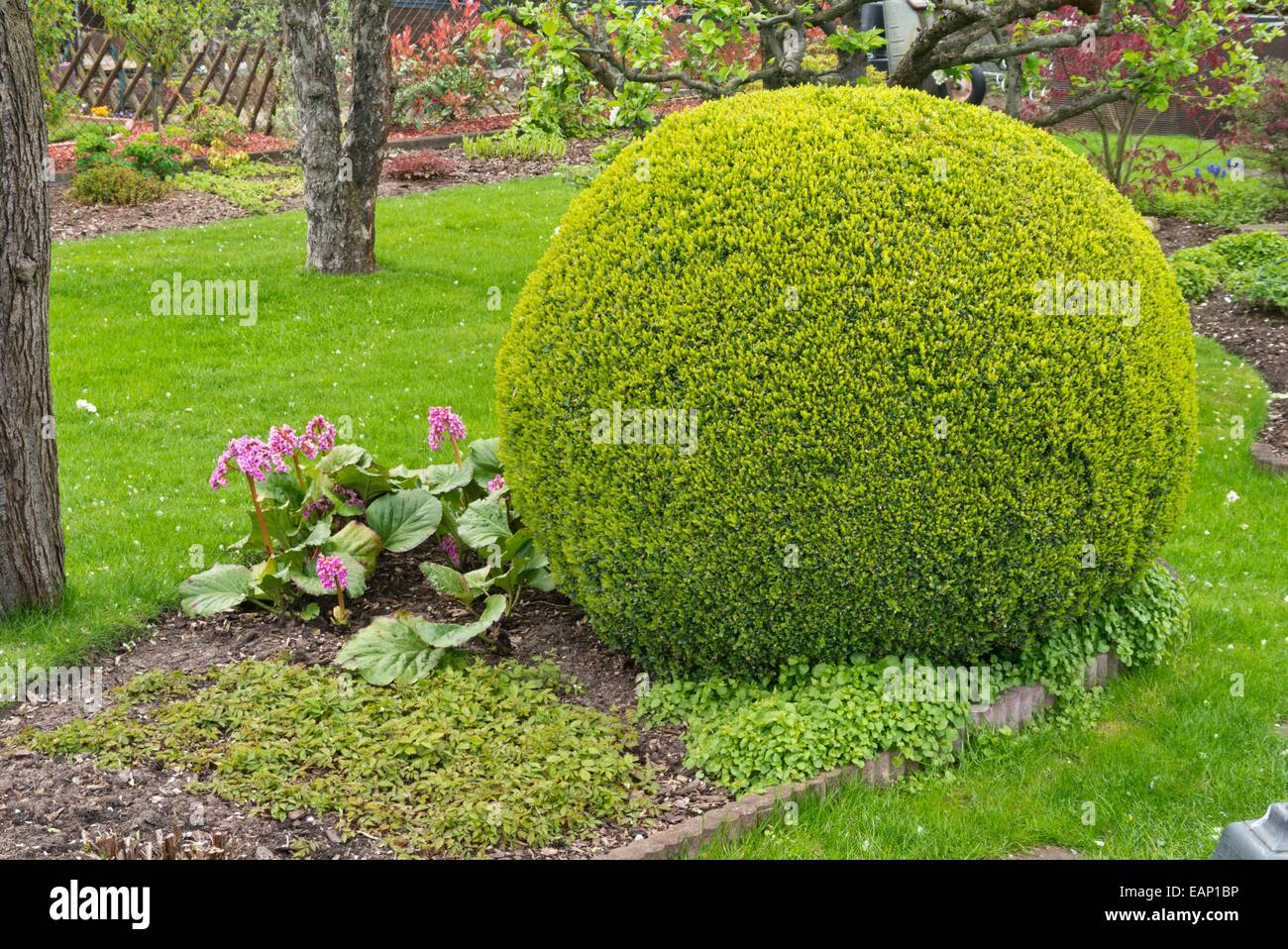 Boxwood Balls Stock Photos Boxwood Balls Stock Images Alamy