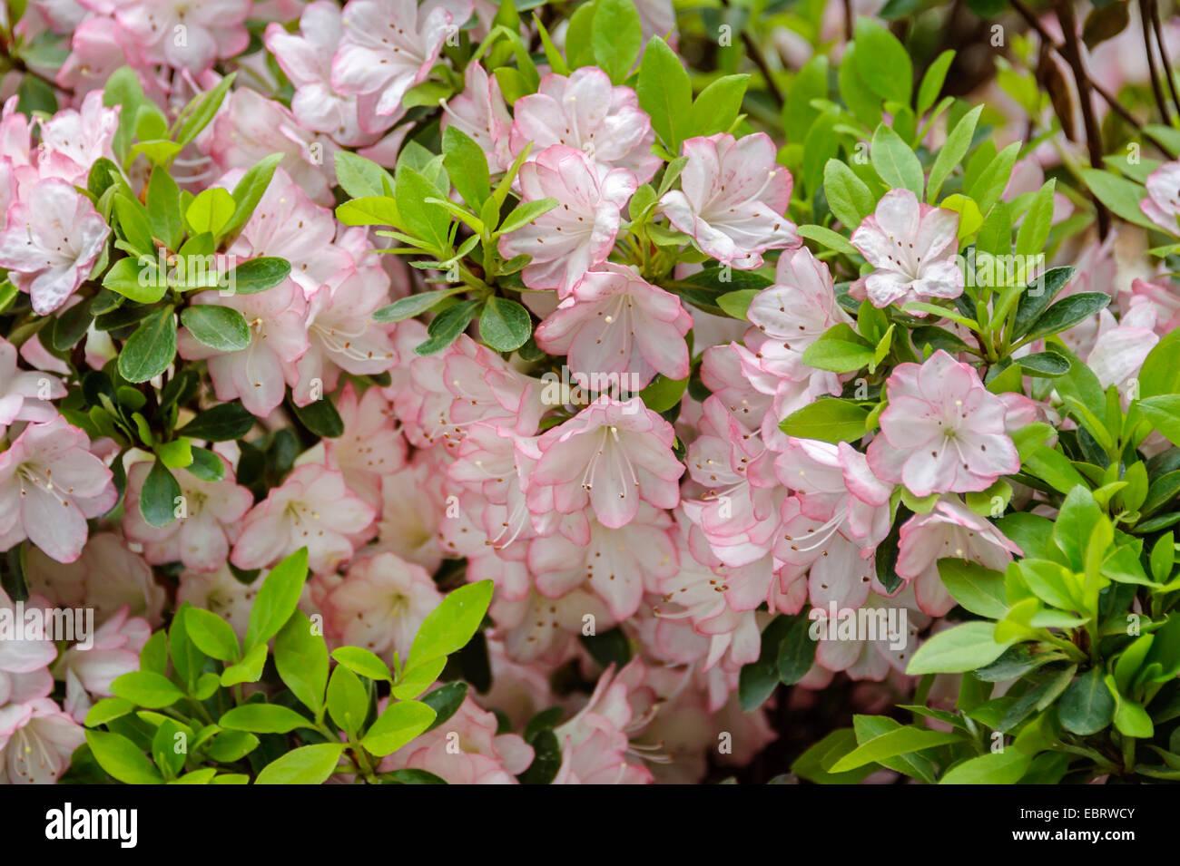Peggy Ann Stock Photos Peggy Ann Stock Images Alamy