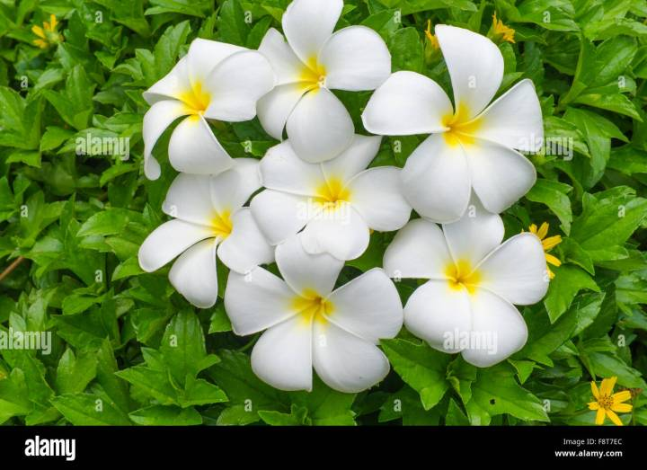 Name of white flower with yellow center image collections flower name of white flower with yellow center gallery flower decoration flowers with yellow centers choice image mightylinksfo Image collections