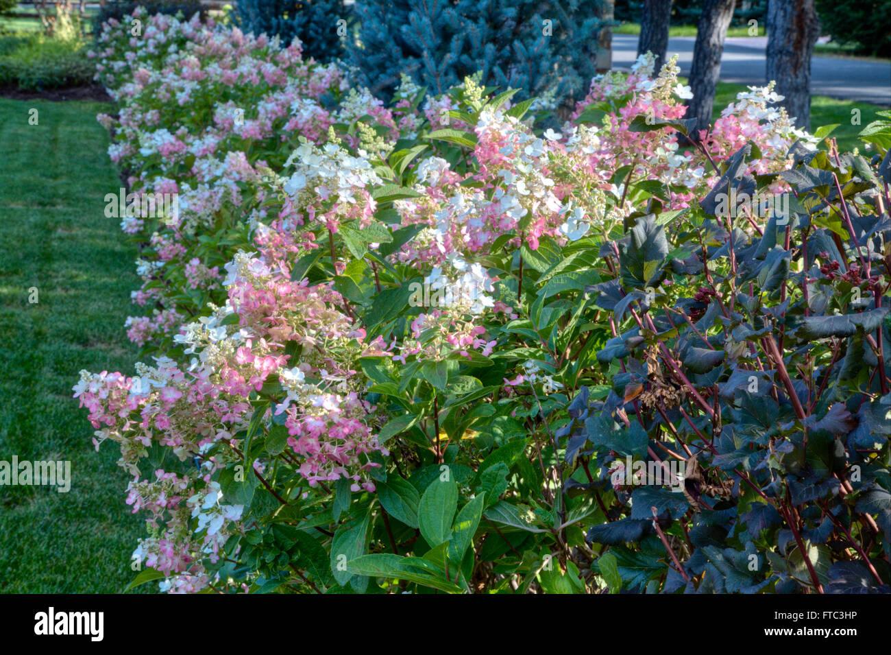 Border With Hydrangea Stock Photos Border With Hydrangea Stock
