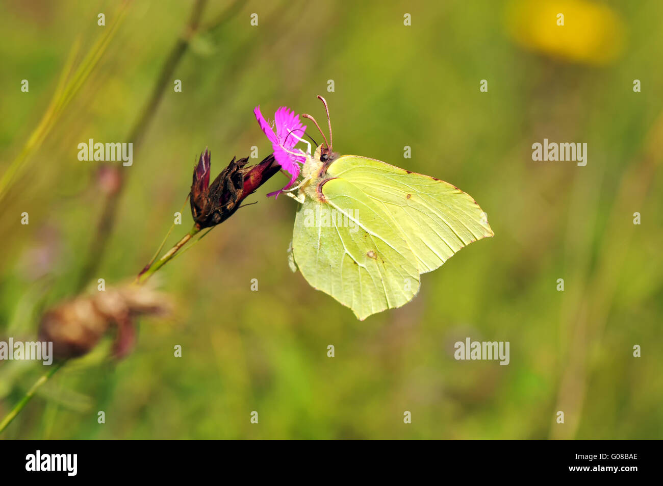 Insect Pictures Stock Photos Amp Insect Pictures Stock