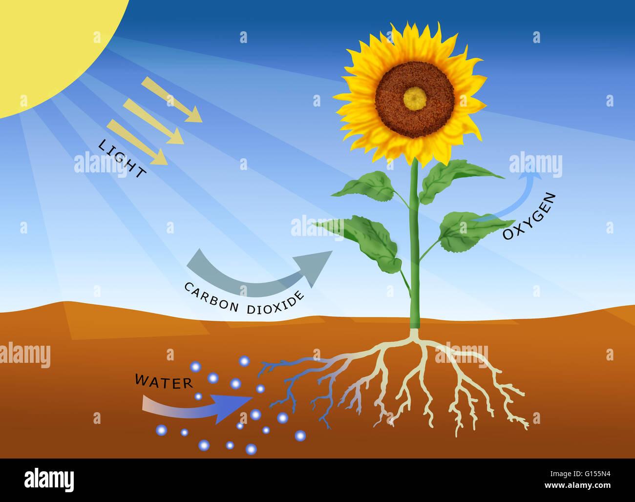 Kinetic Energy Formula Worksheet