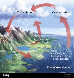 Water cycle illustration The red arrows here show some of the ways Stock Photo: 103991480  Alamy