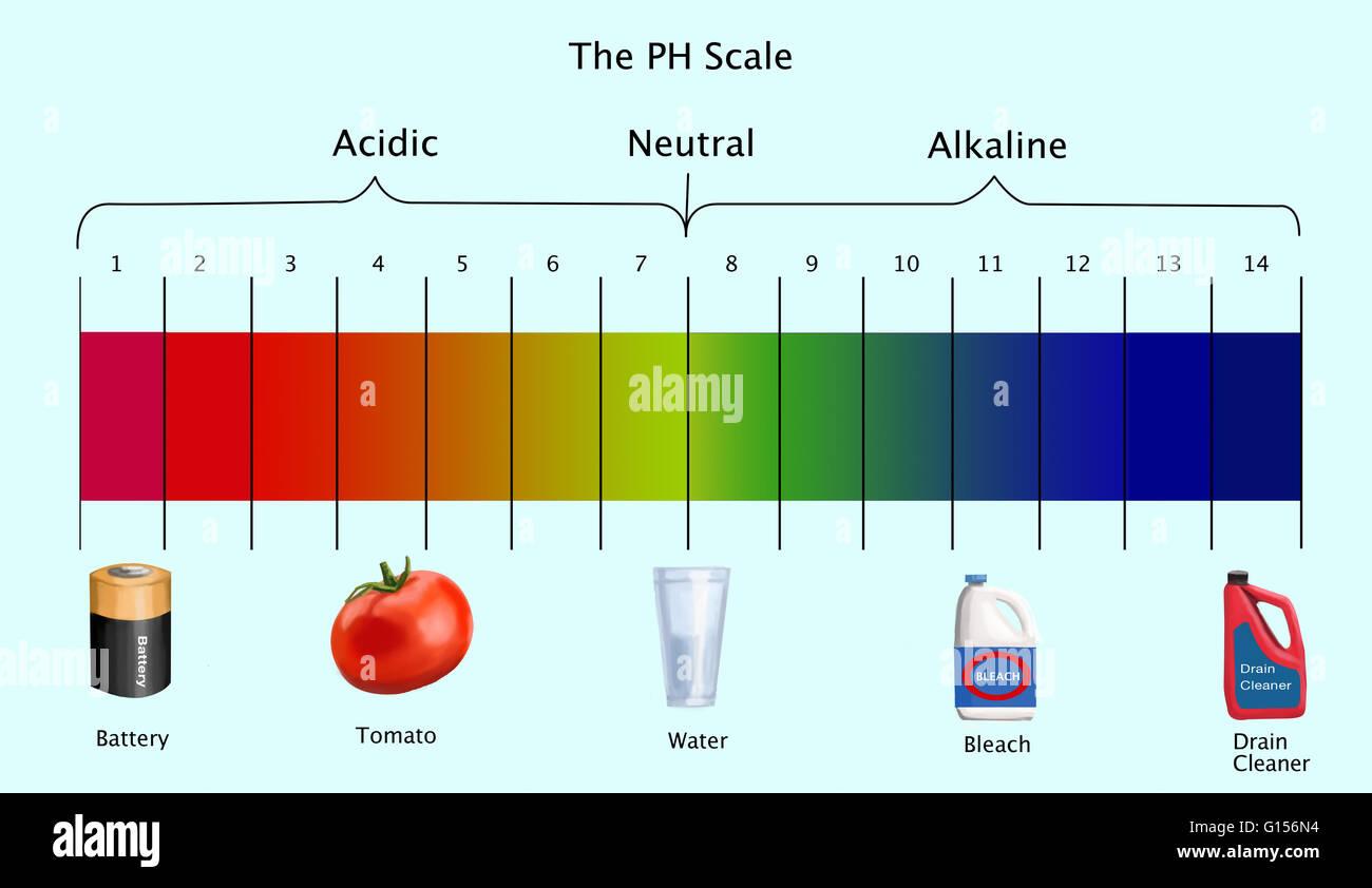 Ph Scale Worksheet
