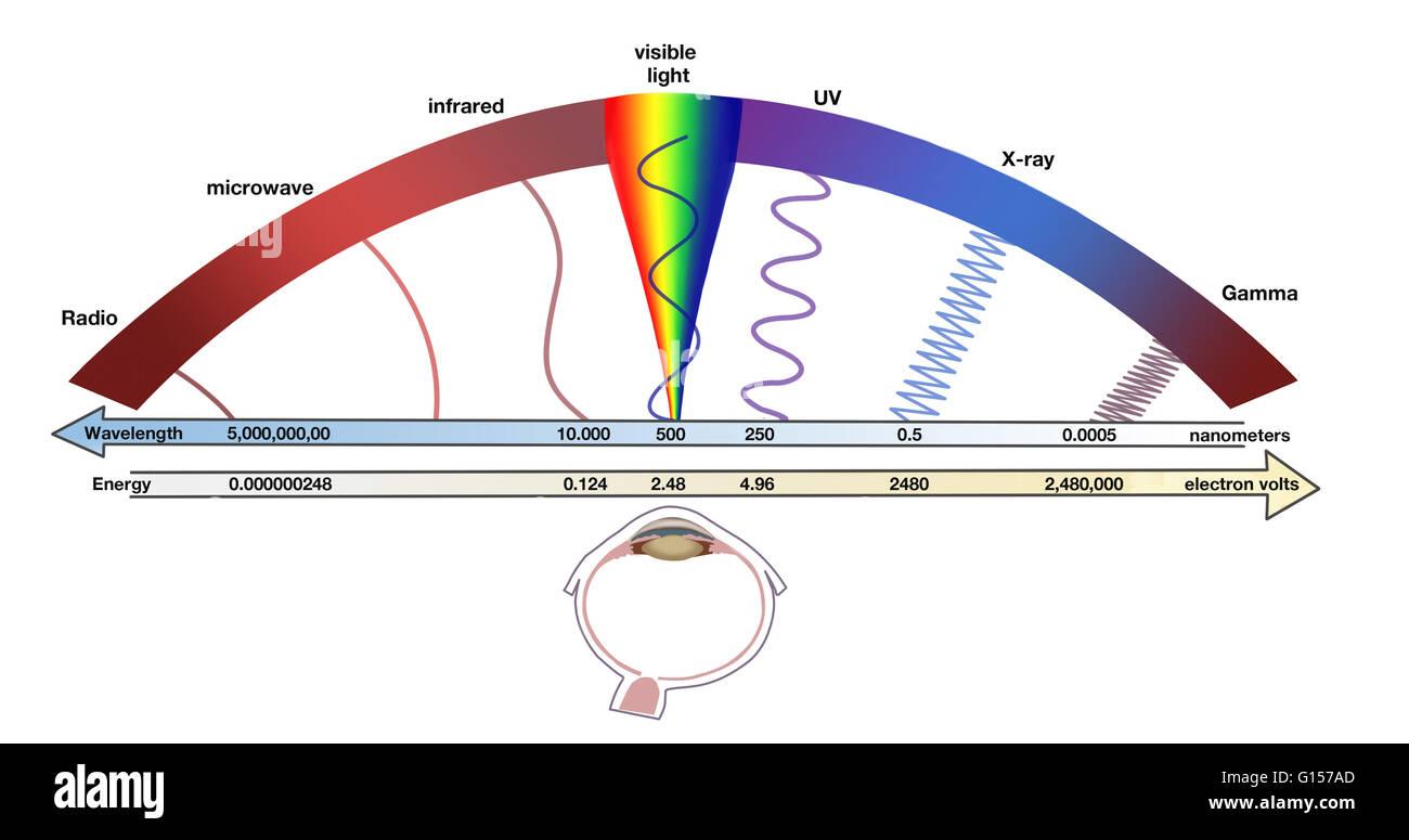 Diagram Illustrating The Electromagnetic Spectrum The